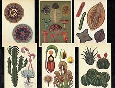 6 Botanical Postcards Art Botany Plants To Frame ? Flower Cacti Carnivorous