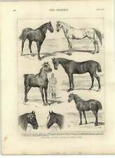 1875 Sketches At The Islington Horse Show