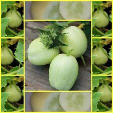 Cucumber crystal apple 20 vegetable garden seeds NOT FOR WA OR TAS