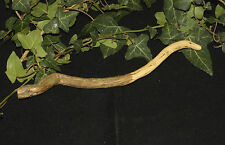 Hand-Carved Rare Rosemary Wood Wand - For Memory - Wicca, Witchcraft, Pagan