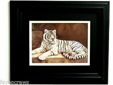 WHITE BENGAL TIGER PICTURE SAFARI ANIMAL MATTED FRAMED 8X10