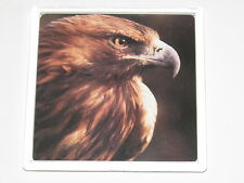 GOLDEN EAGLE HEAD British Bird 9cm Square drinks mat coaster plastic acrylic (A)