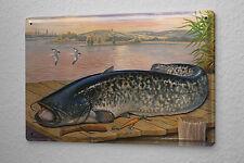 Tin Sign Scholz fish Catfish marine fish predators predatory fish fishing