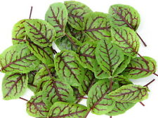 MEDITERRANEAN BLOOD SORREL HOT NEW SALAD PLANT BEAUTIFUL VEINED LEAF 50 SEEDS