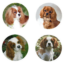Cavalier Spaniel Magnets: 4 Cavies for your Fridge or Collection-A Great Gift