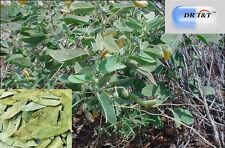 30g Ventilador Xie os (Folium sennae)