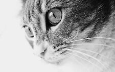 Framed Print - Black & White Image of a House Cat (Picture Poster Animal Art)