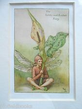 CICELY MARY BARKER - The Lords and Ladies Flower Fairy - Vintage Mounted Print