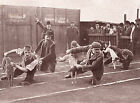 WHIPPET RACING WAITING TO START GREAT PERIOD IMAGE ON DOG GREETINGS NOTE CARD