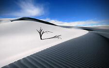 Framed Print - Small Tree Trying to Survive on a Desert Sand Dune(Picture Poster