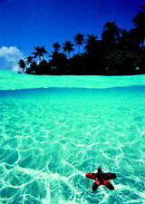 Maldives Dream Holiday clear water/starfish poster    A2 SIZE