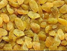 Nashik special Raisins / Kismis / KishMish 1200 Grams or 1.2kg