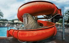 A4 Poster – Walrus on a Water Slide and a Water Park (Funny Picture Print Art)