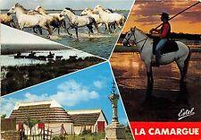 BG5519 en camargue gardians chevaux et taureaux horse   france