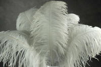 """2 WHITE Ostrich FEATHERS 23-28"""" Full Wing PLUMES Bridal/Wedding/Centerpiece"""