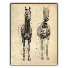 METAL SIGN WALL PLAQUE Anatomy HORSE Vintage Print Surgery/Vet