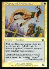 Trainiertes Krummhorn foil/trained pronghorn | nm | Judgment | ger | Magic mtg
