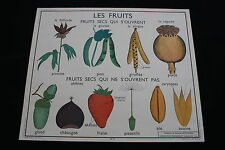 R208 Affiche scolaire papier 9 FRUITS SECS 10 GRAINE 90*75 haricot fraise gland