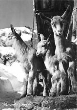 BR17936 Chevre goat Un certain regard france landscape    france