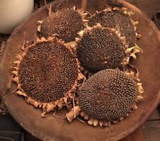 Primitive Dried Sunflower Heads Bowl Fillers FOUR Amish Grown Fall Harvest Decor