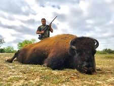 Trophy Bison Buffalo Bull Hunt / South Texas / 2 Nights Lodging / Hunting Deer