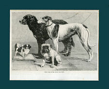GREYHOUND JAPANESE CHIN BULLDOG DOG ART ANTIQUE ENGRAVING PRINT - Dublin 1857