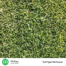 McKays Turf-Type Tall Fescue Lawn Seed - 1kg - Free Postage