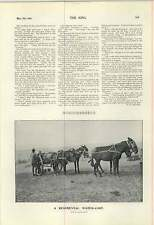 1900 Regimental Water Cart Kicking Mule Cemetery St Govans Chapel