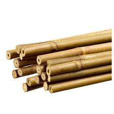 10  Tutori di Bambu pieno per ancoraggio Piante diam. 16/18 mm (180 cm)
