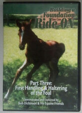 Building Foundation You Can Ride On Horse Training First Handling Haltering Foal