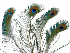 Peacock Feathers | Peacock Swords With Eye Unique - 5 Pieces, Natural