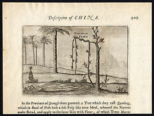 Antique Print-CHINA-VOC-BANANA-VINE-FRUIT-PO LO MIE-Nieuhof-Ogilby-1669
