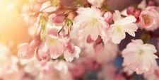 """Infrarotheizung Elegance - Glas rahmenlos, 700 Watt, Motiv """"Kirschblüten"""""""
