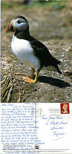 1990's PUFFIN ON FARNE ISLAND NORTHUMBERLAND COLOUR POSTCARD