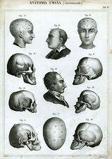 Anatomia: Craniologia.Acquaforte x Studio Medico.Medicina. 4.+ Passepartout.1866