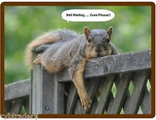 Funny Squirrel Treats .. Still Waiting  Refrigerator / Tool Box /  Magnet
