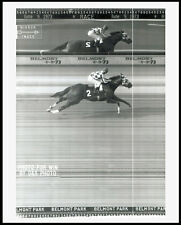 SECRETARIAT - BELMONT STAKES PHOTO FINISH LINE CAMERA HORSE RACING PHOTO!