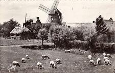 LE MONT DOL 14 le moulin du tertre moutons timbrée 1964