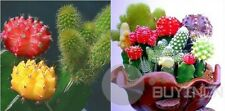 Mixture Of Cactus Flower Seed 10 seeds Yard Patio garden plants balcony Bonsai