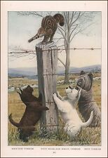 Scottie, Westie & Skye Terrier Dogs after Cat by Fuertes, vintage print 1919