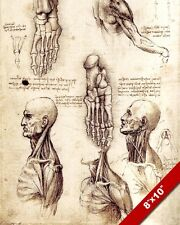 LEONARDO DA VINCI HUMAN ANATOMY FOOT HEAD NECK SKETCH REAL CANVAS ART PRINT