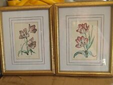 Pair pictures of burgandy curly tulips (REDUCE