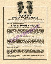 Rules In A Border Collie's House