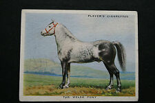Welsh Pony    Original 1930's Vintage Large Illustrated Card   VGC
