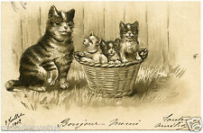 chats.cats.panier .basket      gaufré.embossed
