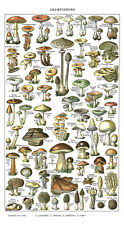 Vintage Mushroom chart botanical Map Panorama Poster 23.6'' x 13'' inches