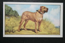 BULLMASTIFF   Original 1930's Vintage Colour Card # VGC