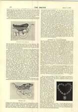 1897 Leveson CANOA CARROZZA il carrello della posta Passeggino Fashions