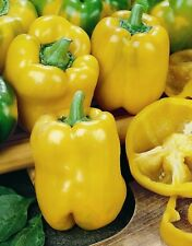Vegetable - Sweet Pepper - D'Asti Giallo - 100 Seeds