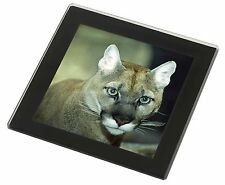 Stunning Big Cat Cougar Black Rim Glass Coaster Animal Breed Gift, AT-17GC